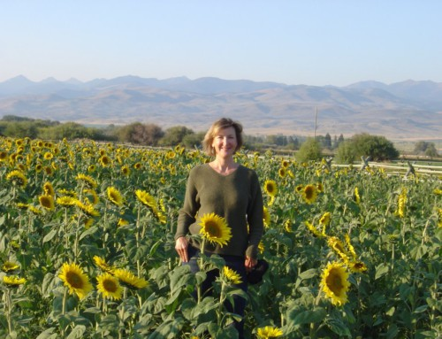 Sunflower field at Ruby Springs