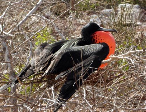 Bird watching in the Galapagos