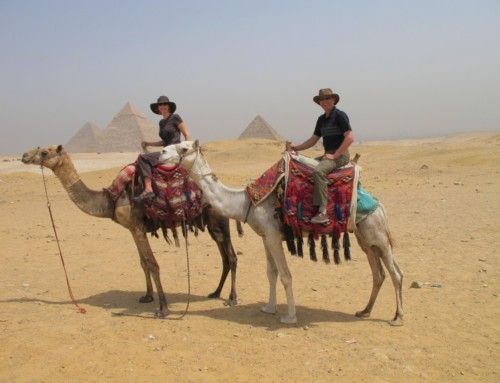 Riding camels in Egypt