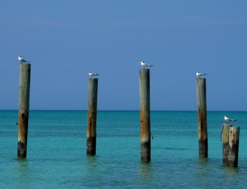 Turquoise Turks & Caicos