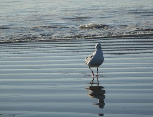 Walking the beach in Seaside, OR