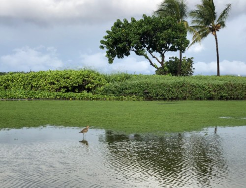 Moist Maui