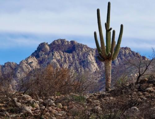 Saguaro Nat'l Park, Tucson, AZ